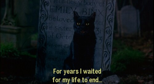 cat, end, and life image