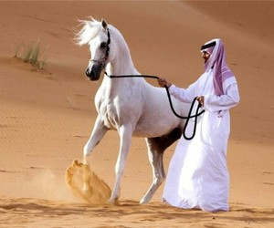 desert and horse image