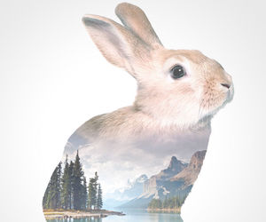 rabbit and art image