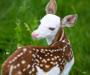 animal and deer image