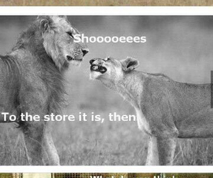 animals, lol, and shoes image