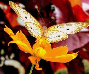 butterfly, flower, and white image