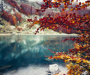 nature, tree, and lake image