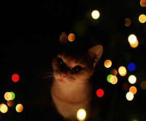 cat, christmas, and meow image