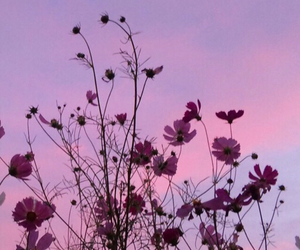 flowers, sky, and wallpaper image