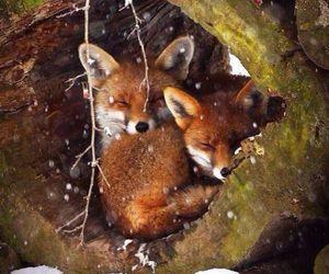 fox, animal, and winter image