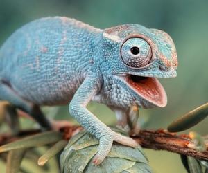 chameleon and animal image