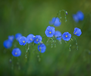 blue, pretty, and wildflowers image