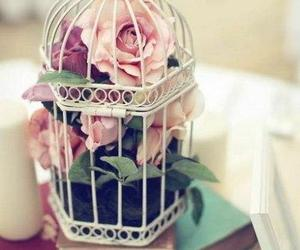 flowers, rose, and cage image