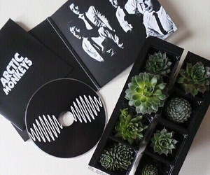 arctic monkeys, plants, and music image