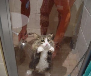 cat, shower, and funny image