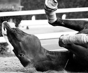 black and white, cheval, and horse image