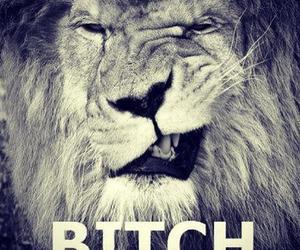 lion, animal, and bitch image