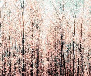 header, tree, and pink image
