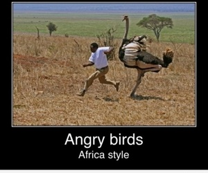 africa, angry birds, and funny image