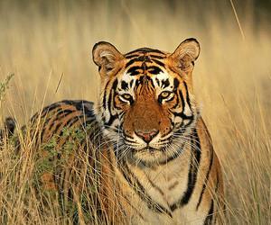 Animal kingdom, asia, and beast image