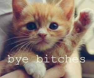 bitch, bye, and cat image