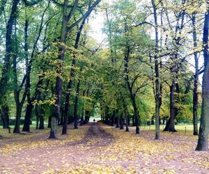 autumn, fall, and oslo image