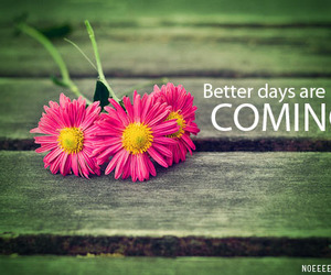 flowers, better, and quote image