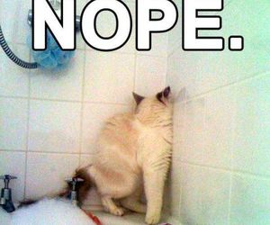 cat, funny, and nope image