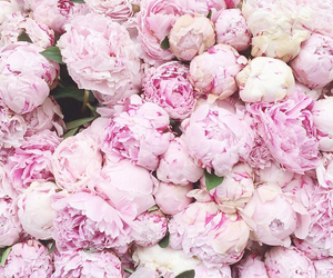 beautiful, cool, and flowers image