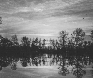 black and white, black, and tree image