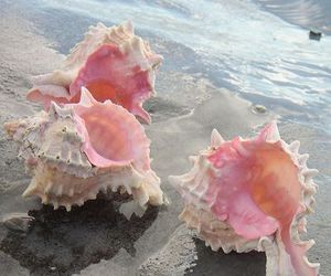 beach, pink, and shell image