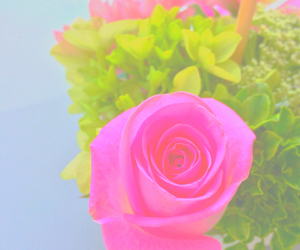 flower, pink rose, and rose image