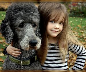 adorable, awesome, and dog image