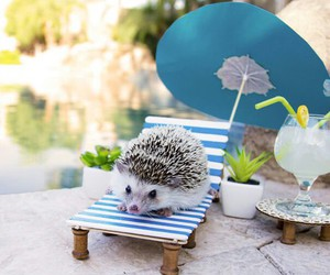 hedgehog and cute image