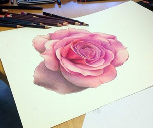 draw, rose, and drawing image
