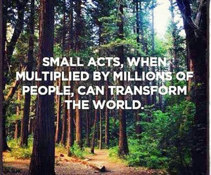 forests, kindness, and peace image