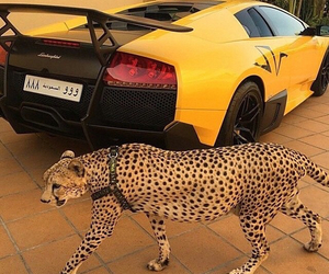 car, luxury, and sports car image