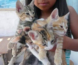 cat, animal, and tumblr quality image