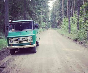 forest, summer, and travel image