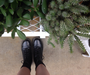 aesthetic and cactus image