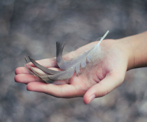 feather and hand image