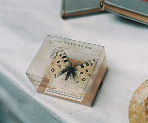 butterfly, vintage, and photography image