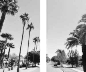 amazing, palm trees, and photography image