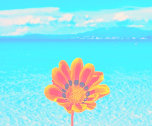 flowers, blue, and ocean image
