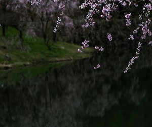 cherryblossom and flowers image