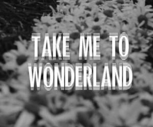 wonderland, flowers, and black image