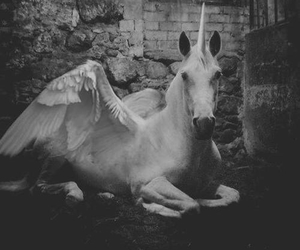 unicorn, black and white, and magic image