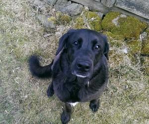 black dog, cute eyes, and dog image