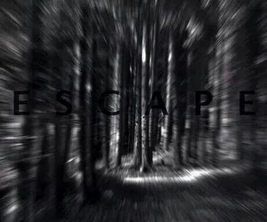 escape, forest, and black and white image