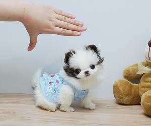 dog, OMG, and cute image