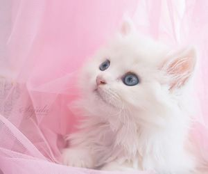 cat, grunge, and pink image