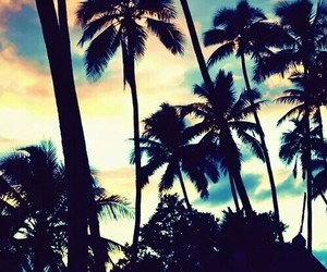 beach, palm trees, and paradise image