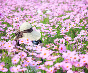flowers, hat, and pink image
