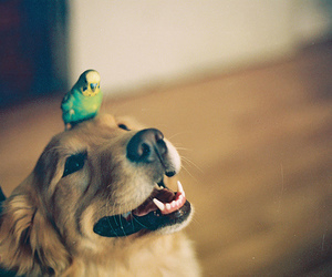 dog, cute, and bird image